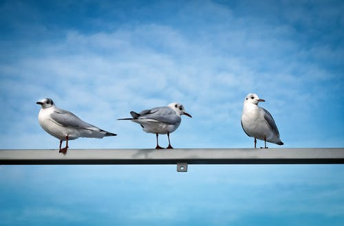 seevogel, 側面圖, 日光, 棲息 的 免費圖庫相片