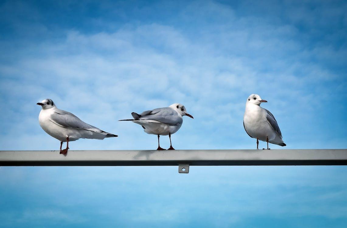 seevogel, 側面圖, 動物
