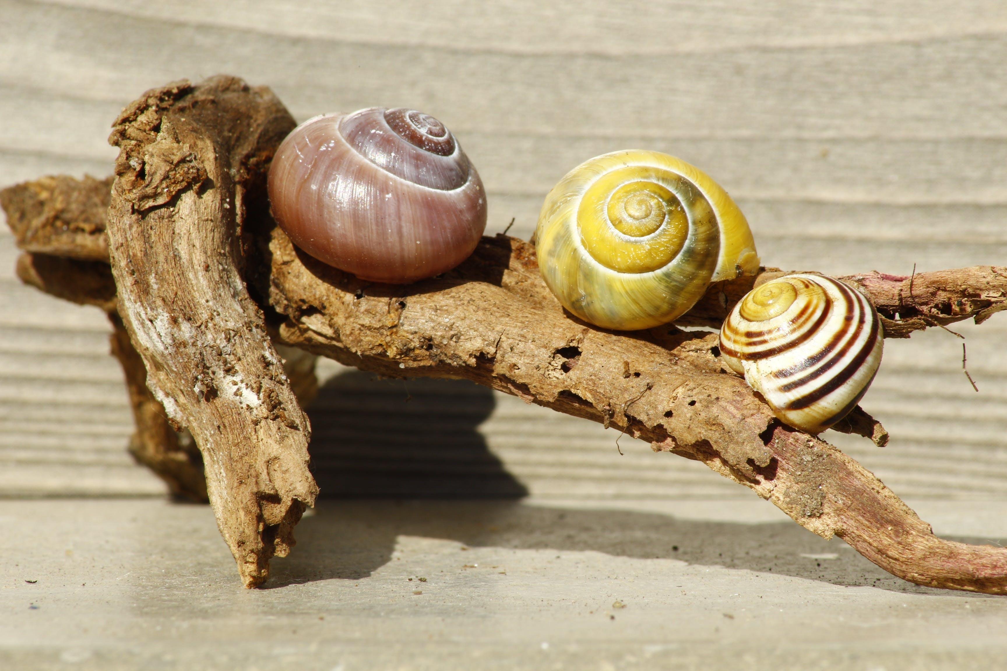 Free stock photo of wood, nature, animals, shell