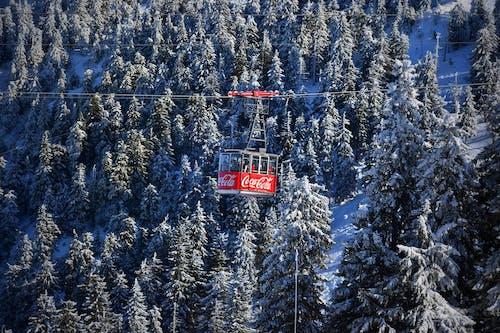 Foto d'estoc gratuïta de arbres, boscos, constipat, hivern