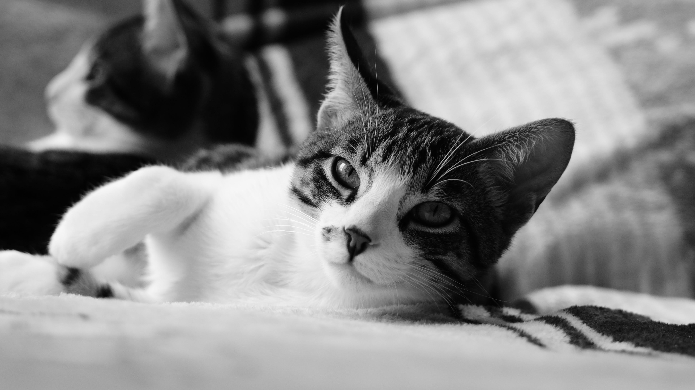 Free stock photo of animal, cat, feline look, kittens