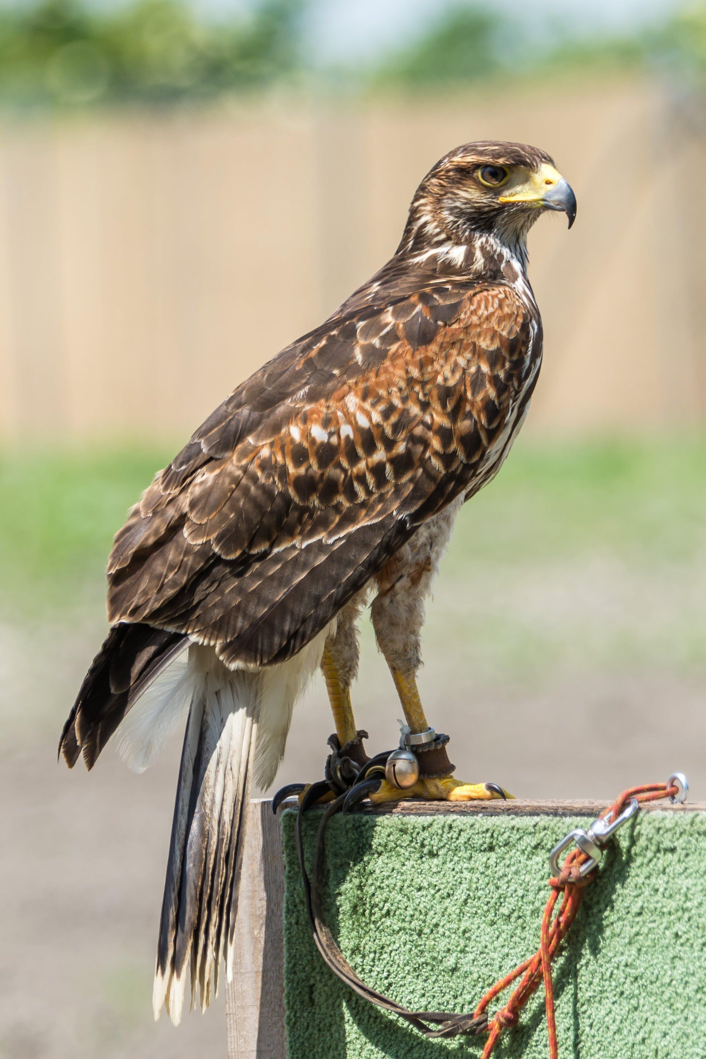 Free stock photo of animal, predator, ptak