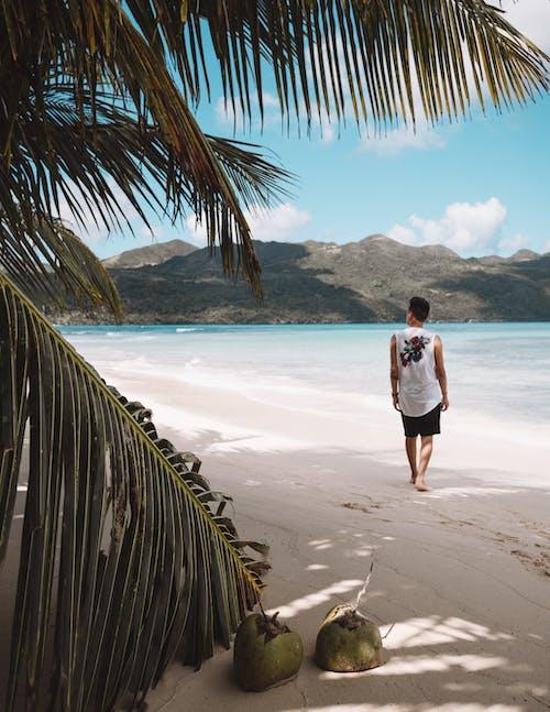 Foto d'estoc gratuïta de esbarjo, home, illa, mar