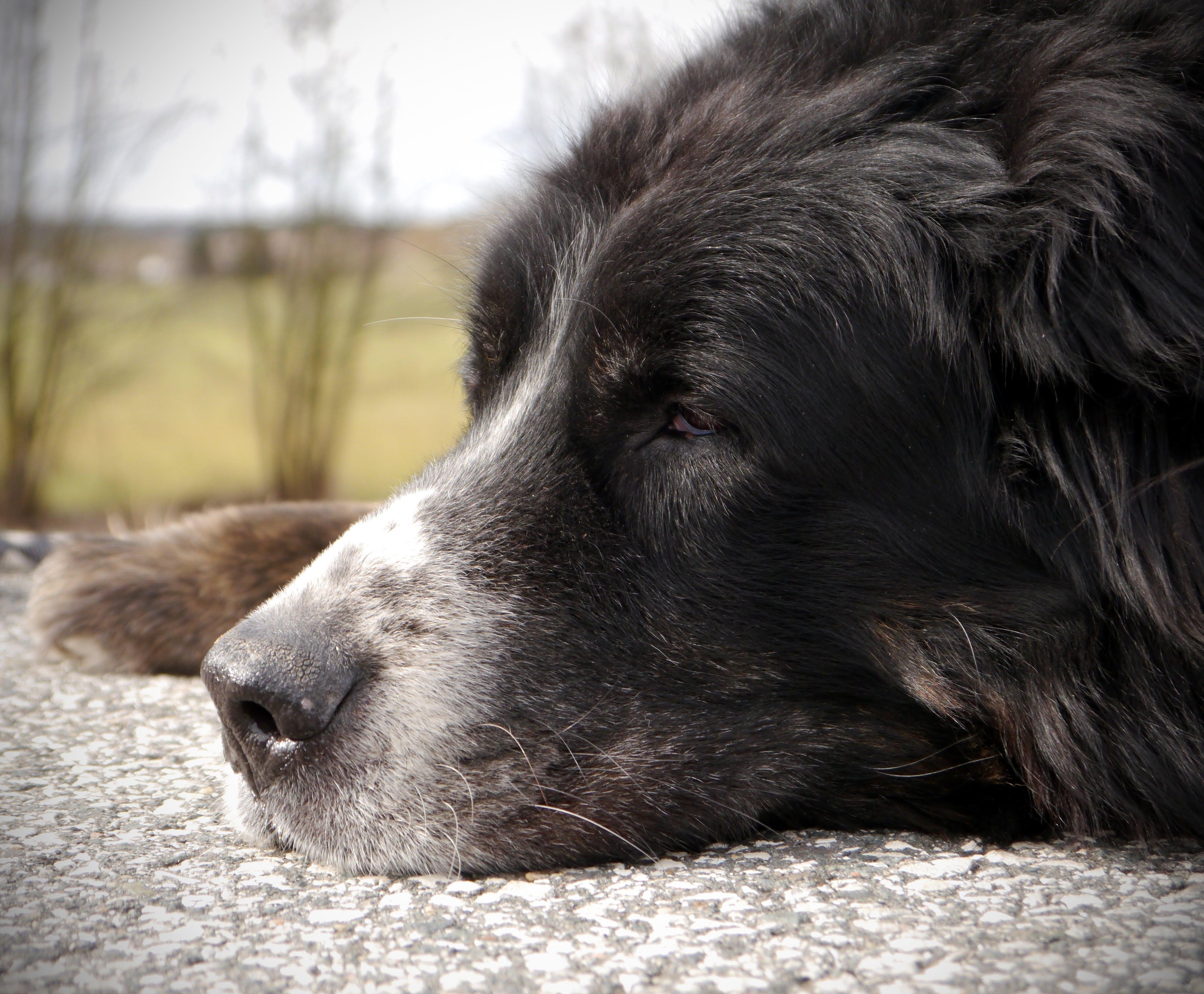 Free stock photo of dog, break, black, rest