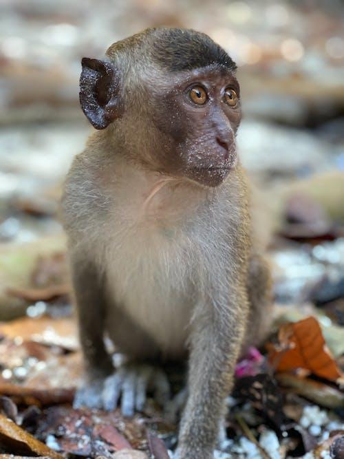 Brown Monkey Sitting On Ground