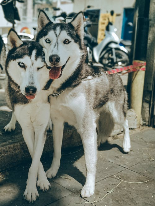 Ilmainen kuvapankkikuva tunnisteilla eläimet, koira, koirat, lemmikit