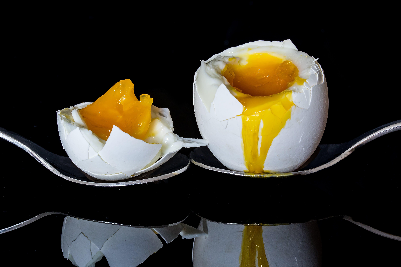 Free stock photo of food, healthy, breakfast, egg