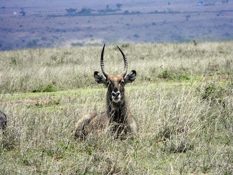 Free stock photo of africa, wild animal