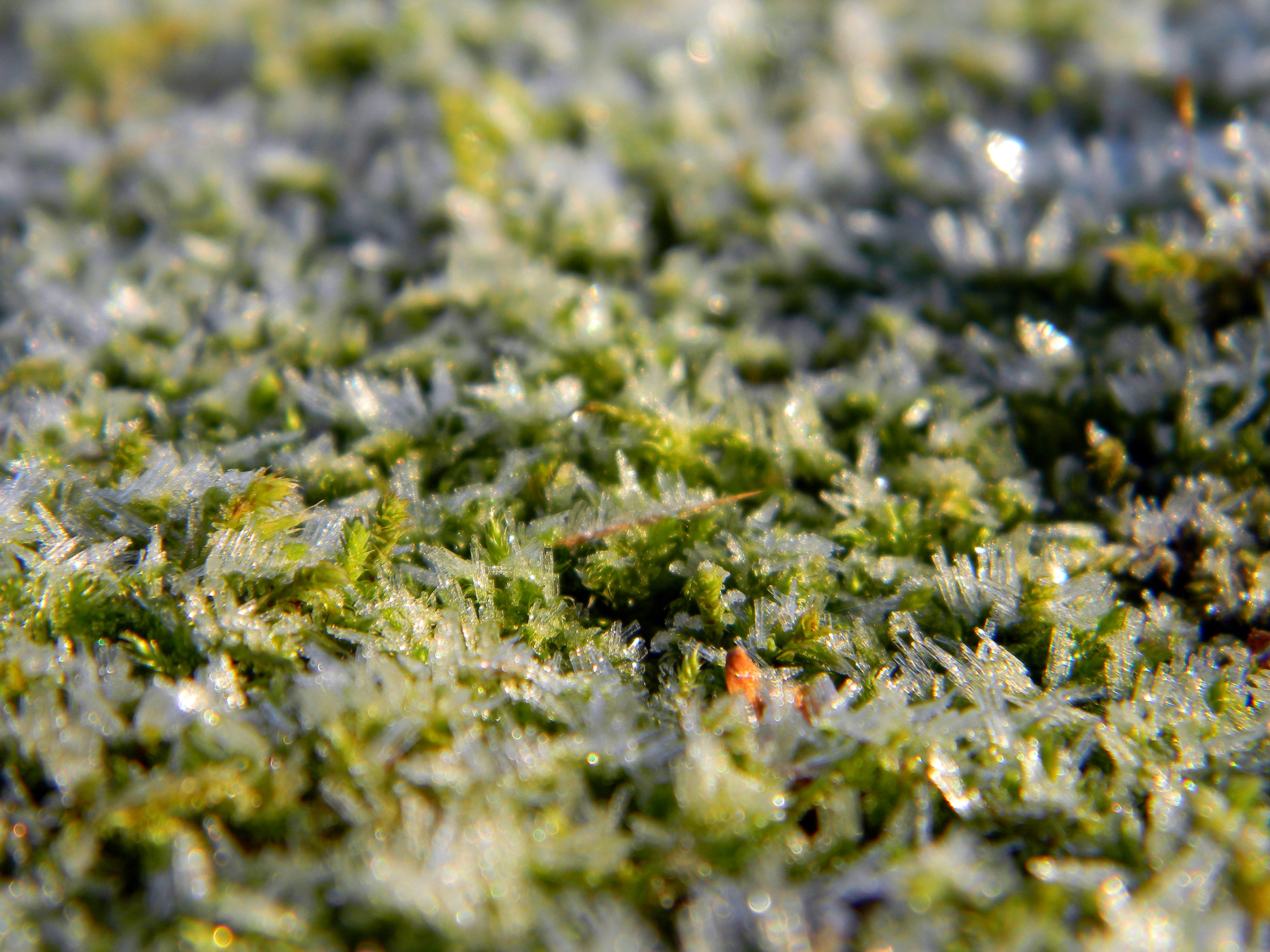 Free stock photo of forest, winter, frozen, grass