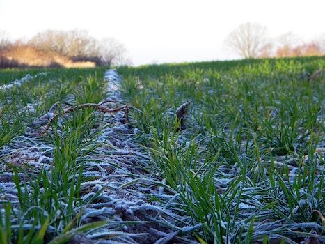 Free stock photo of field, frozen, grass, green