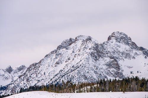 감기, 겨울, 꽁꽁 언, 눈의 무료 스톡 사진