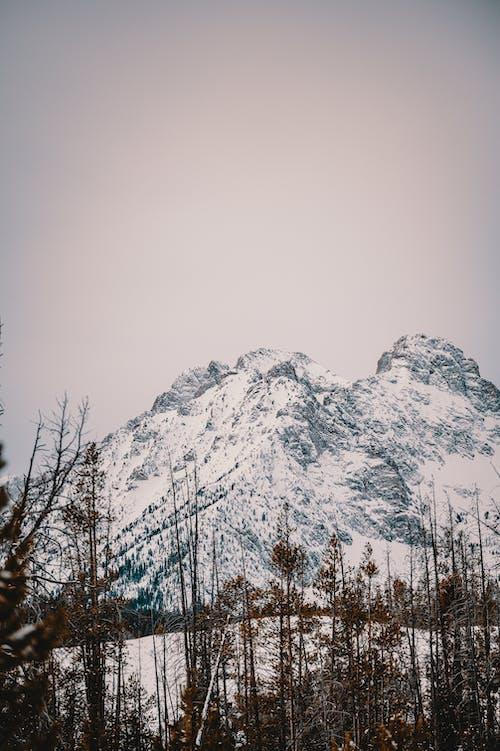 Безкоштовне стокове фото на тему «дерева, замерзання, заморожений, засніжений»