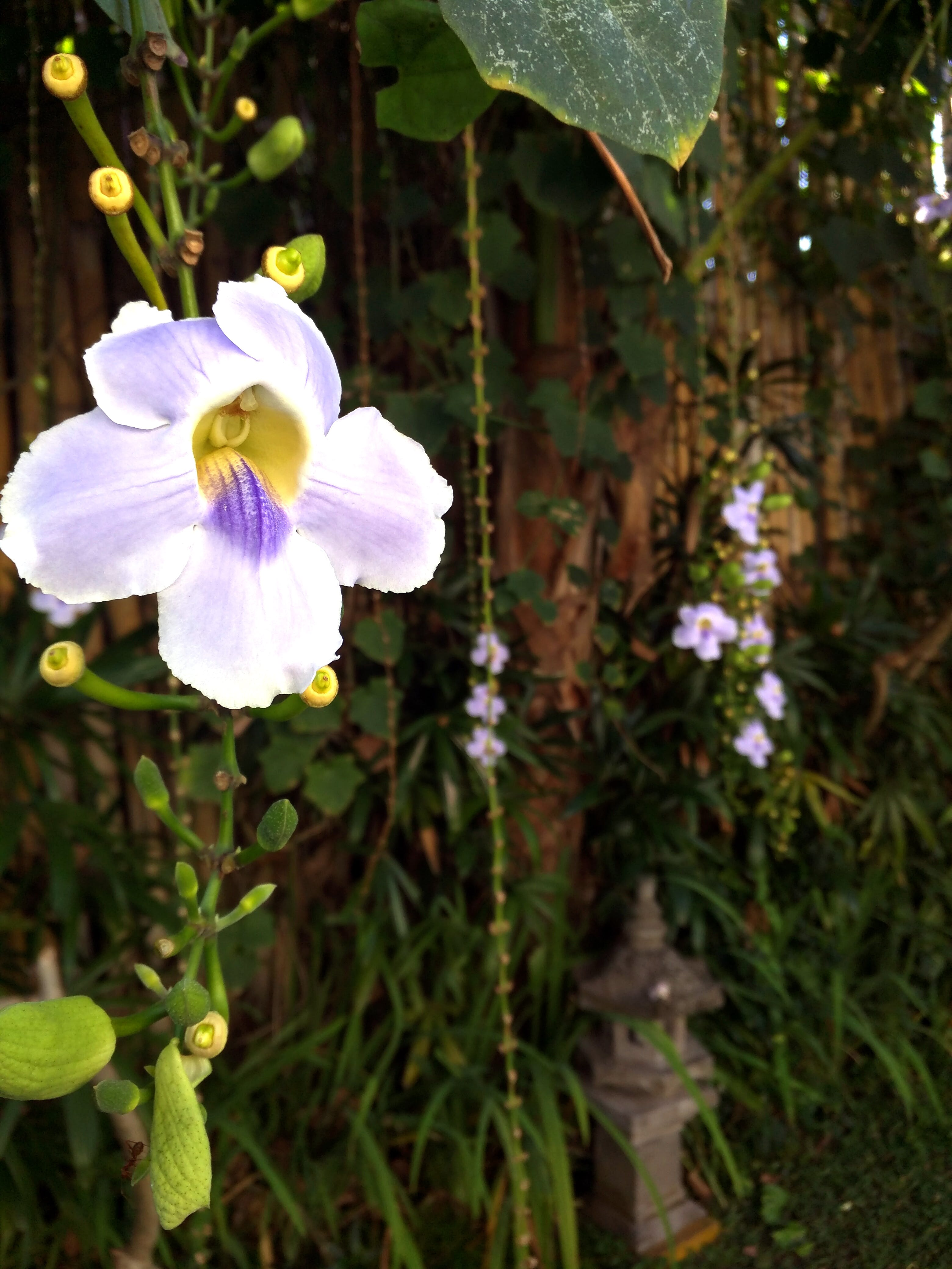 Free stock photo of flower, hanging, jungle, orchid