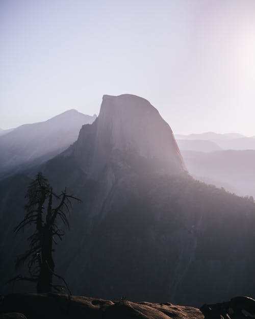 Free stock photo of dead tree, fog, foggy, half dome