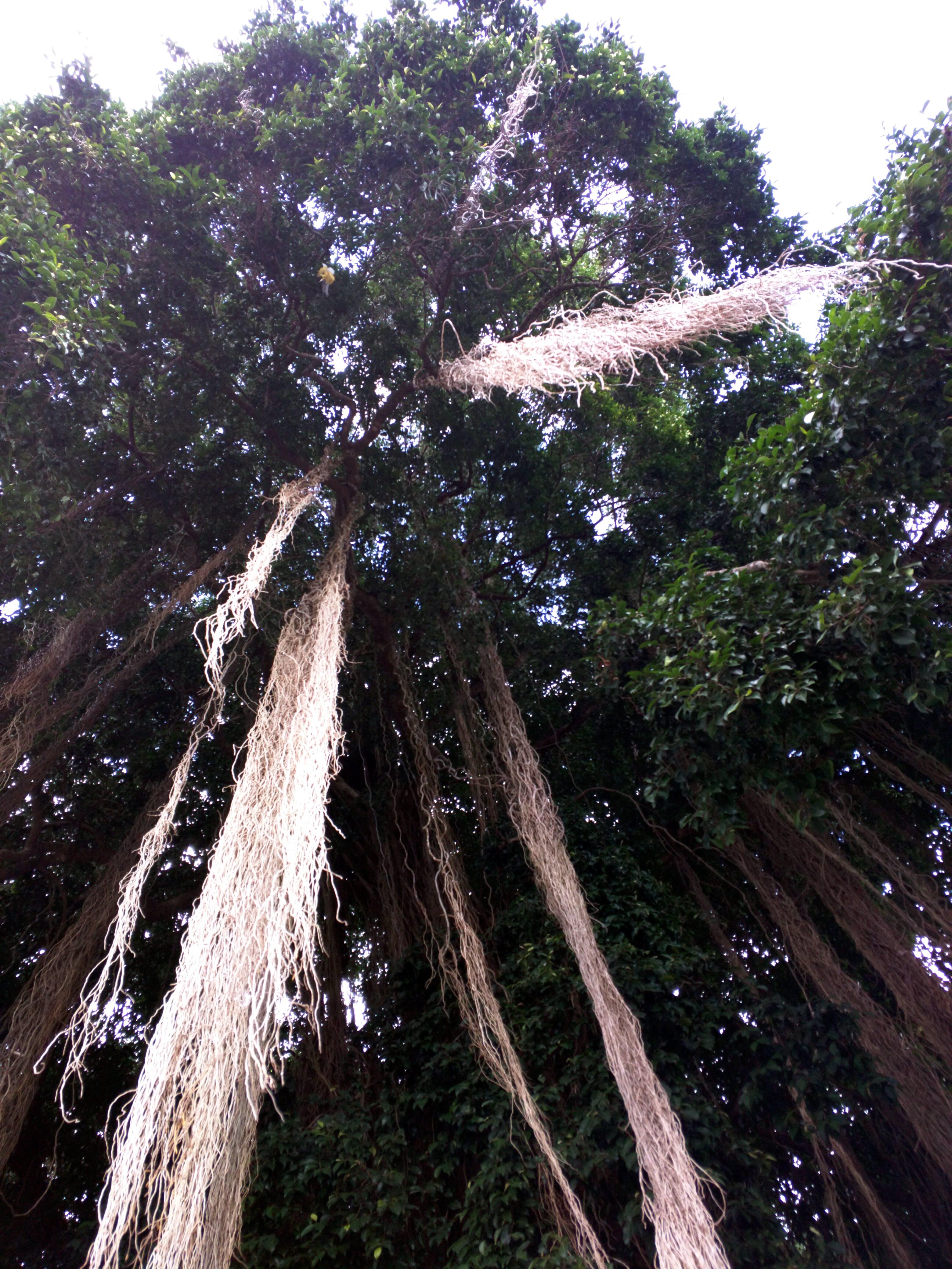 Free stock photo of bali, hanging, tree