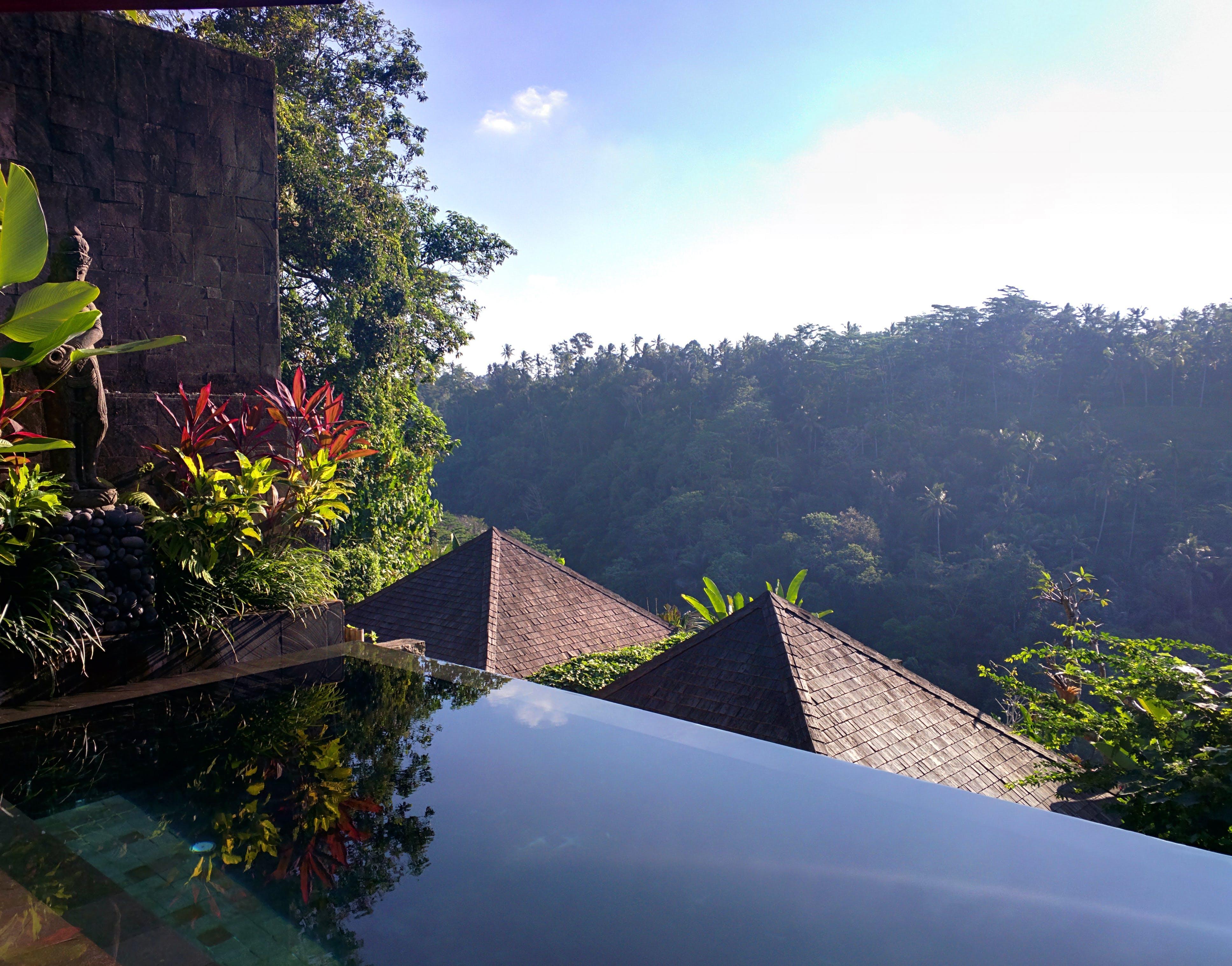 Free stock photo of bali, jungle, pool, rooftop