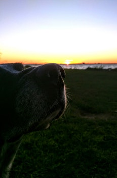Free stock photo of sunset, ocean, dog, enjoy