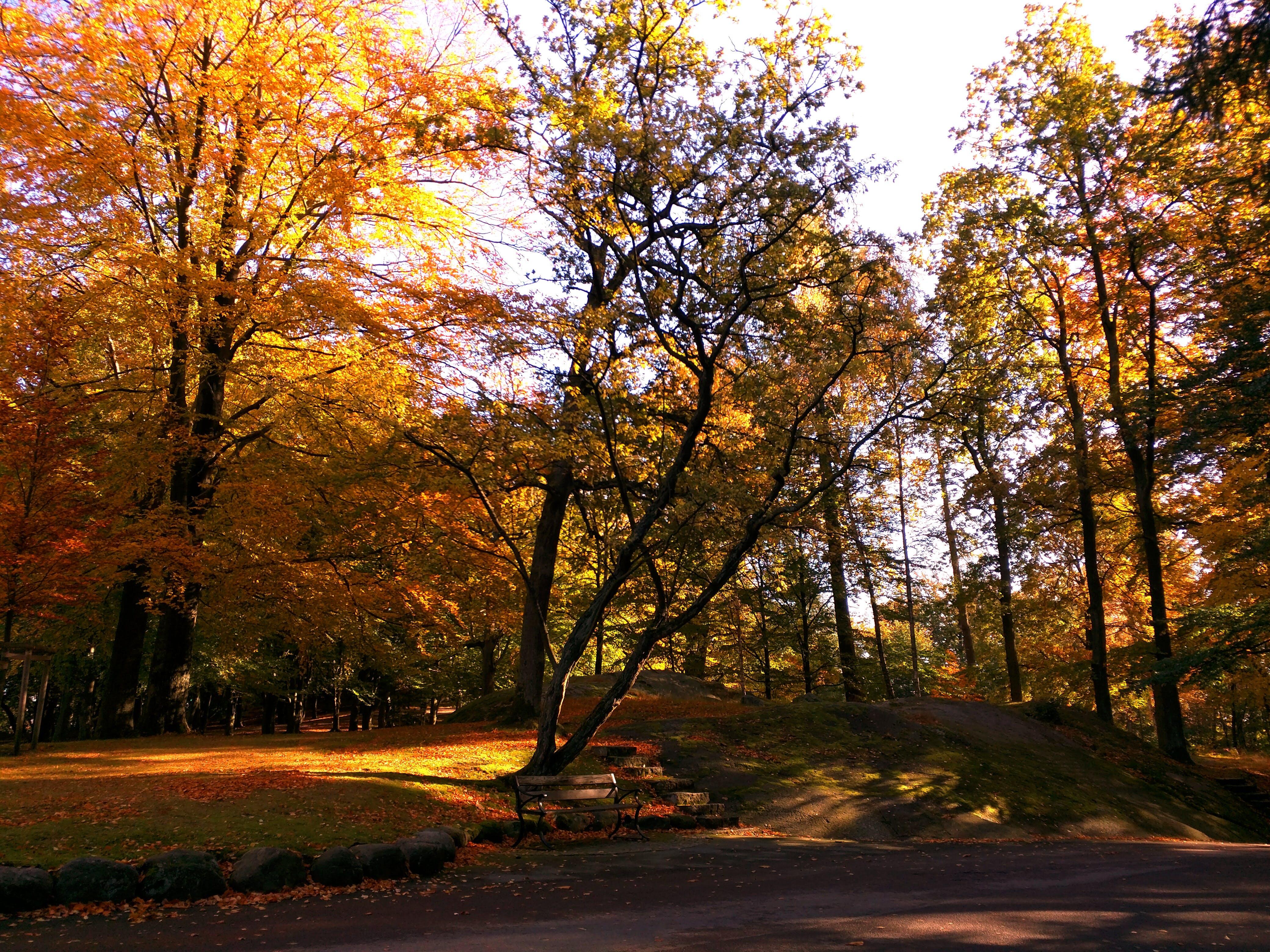 Free stock photo of autumn, autumn colours, bench, leaves