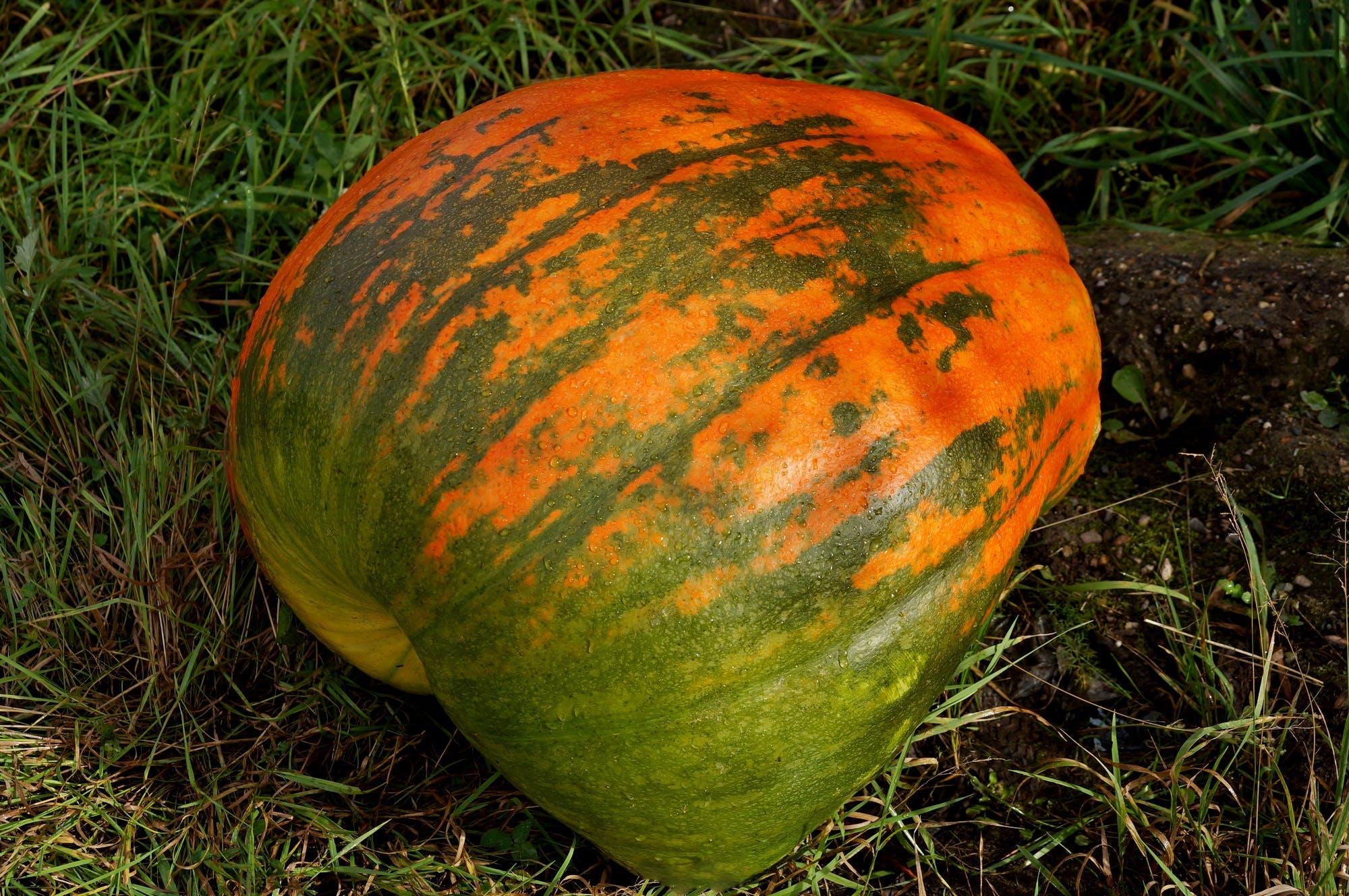 Free stock photo of food, vegetables, harvest, autumn