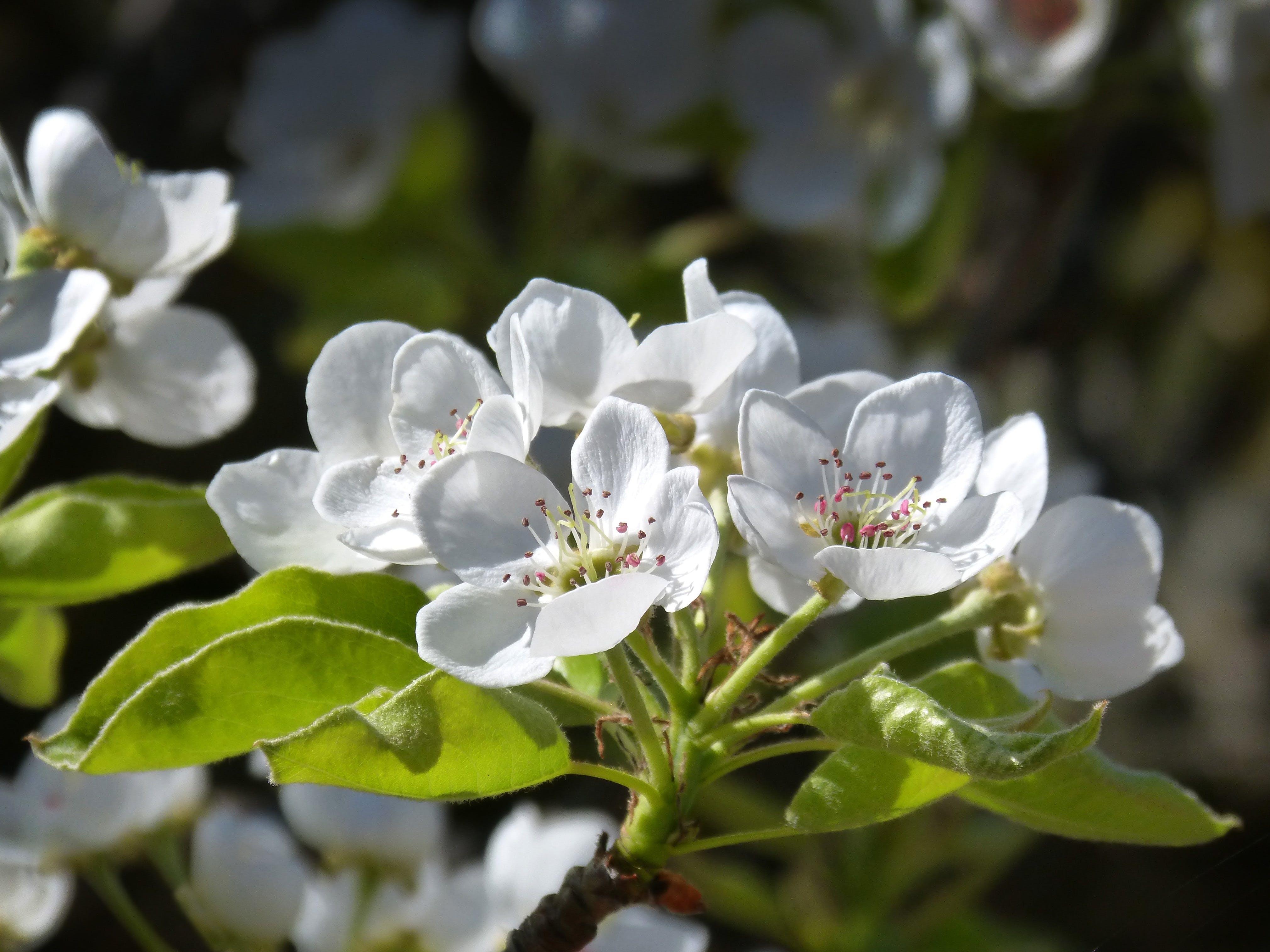 Free stock photo of spring, flower, fruit, detail
