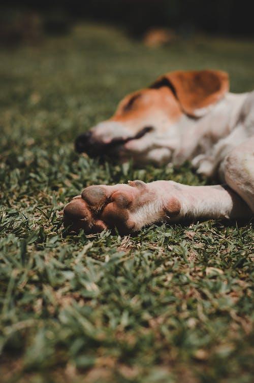 Foto stok gratis anjing, Berbaring, berbayang, berbohong