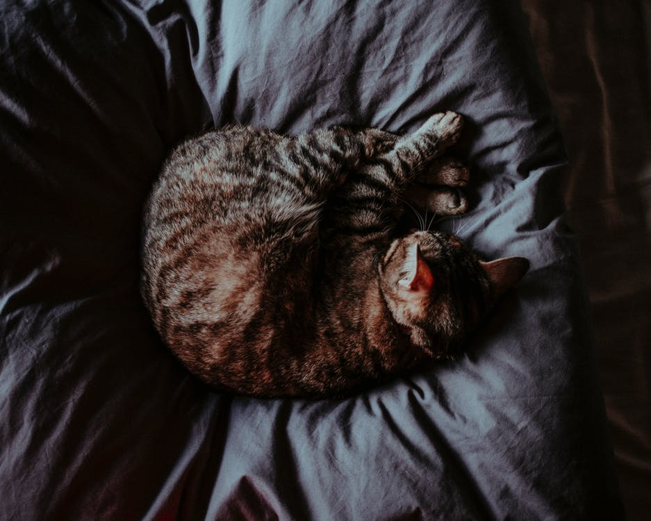 High Angle Photo of Cat Sleeping on Bed