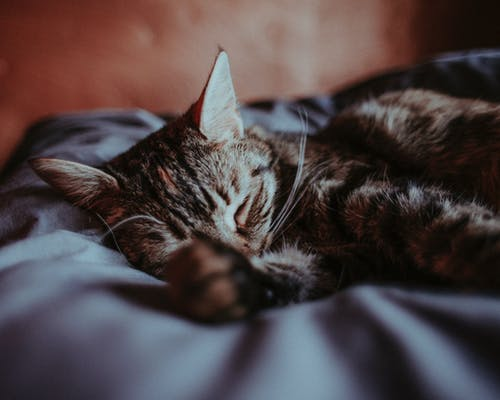 Close-Up Photo of Tabby Cat Lying on Bed
