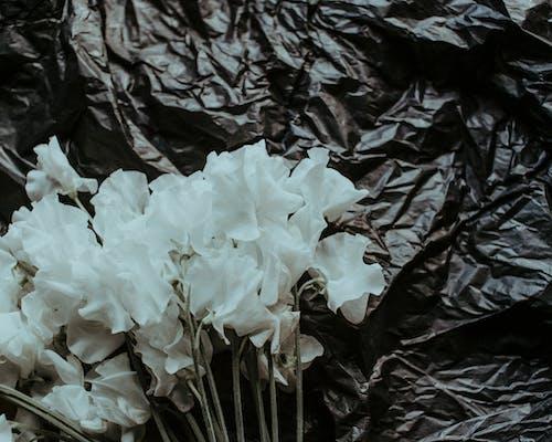 Gratis lagerfoto af blomster, forurening, hvide blomster, nul affald