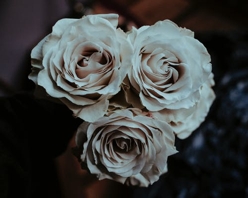 Close-Up Photo of White Roses