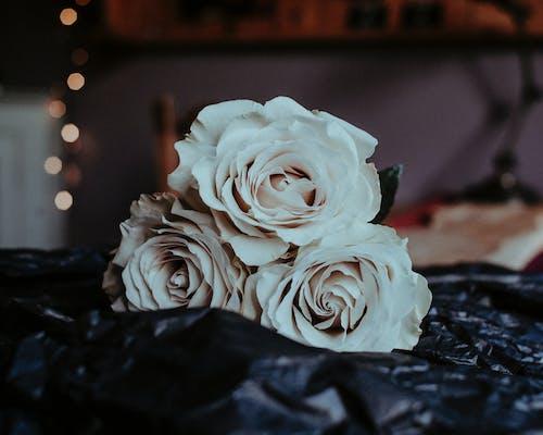 Close-Up Photo of White Roses
