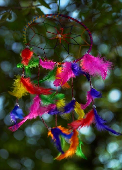 Základová fotografie zdarma na téma barevný, barvy, bokeh, dekor
