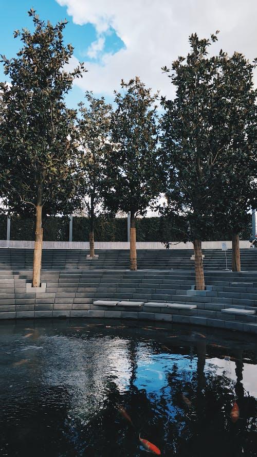 Foto profissional grátis de água, árvores, céu, parque