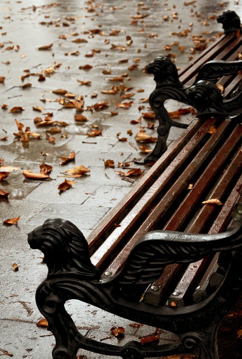 Photo of Wet Wooden Bench