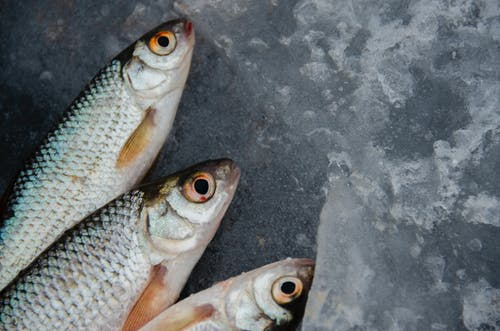 Silver and Orange Fish on Ice