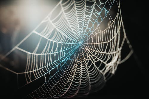 Spider Web In Close-Up Photography