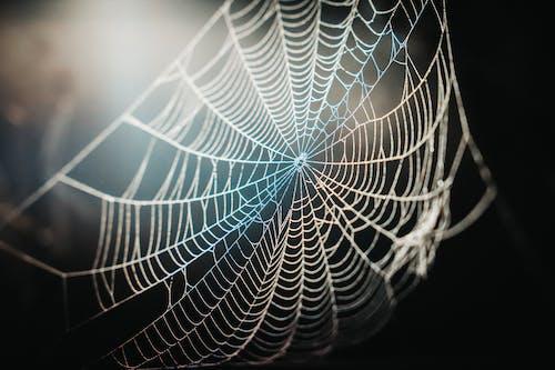 Darmowe zdjęcie z galerii z pajęczyna, pułapka, sieć, wzór
