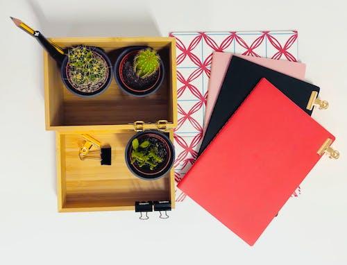 Free stock photo of cactus, desktop, notebooks