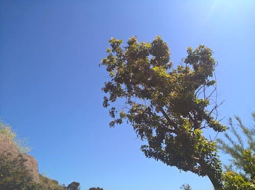 Gratis arkivbilde med himmelen, sol