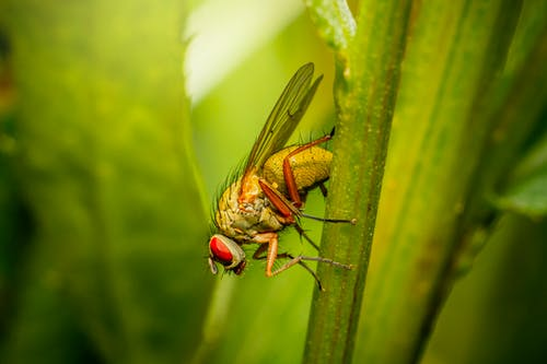 Close-Up Photography of Green Fly Perched on Stem