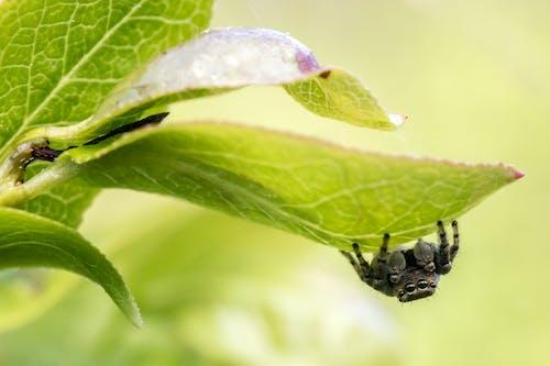 動物, 動物攝影, 害蟲, 寄生物 的 免費圖庫相片