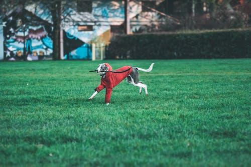 Photo of Dog Running on Grass Field