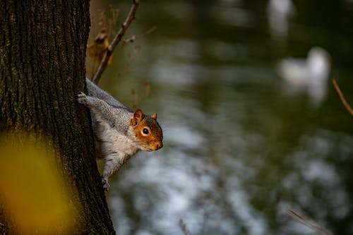 Selective Focus Photo of Brown Squirrel on Tree Branch