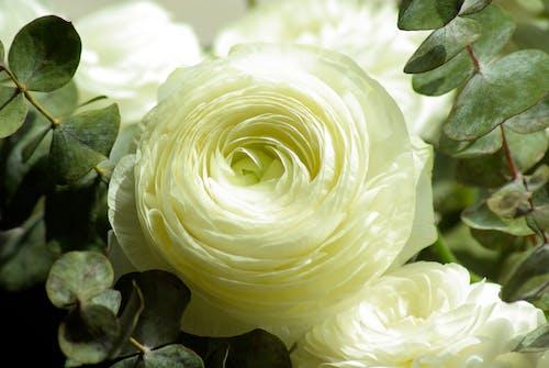 Foto d'estoc gratuïta de blanc, flor, flor blanca, floració