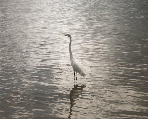 Foto stok gratis air yang tenang, burung, burung bebas