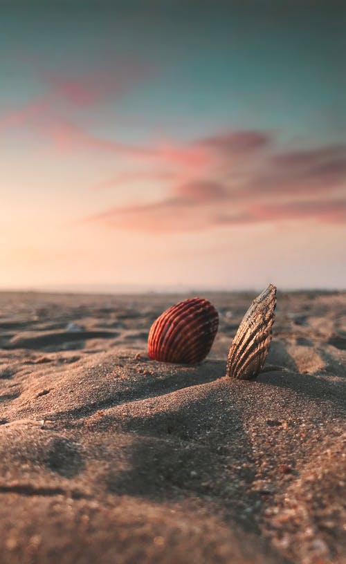Brown Sea Shells on Brown Sand