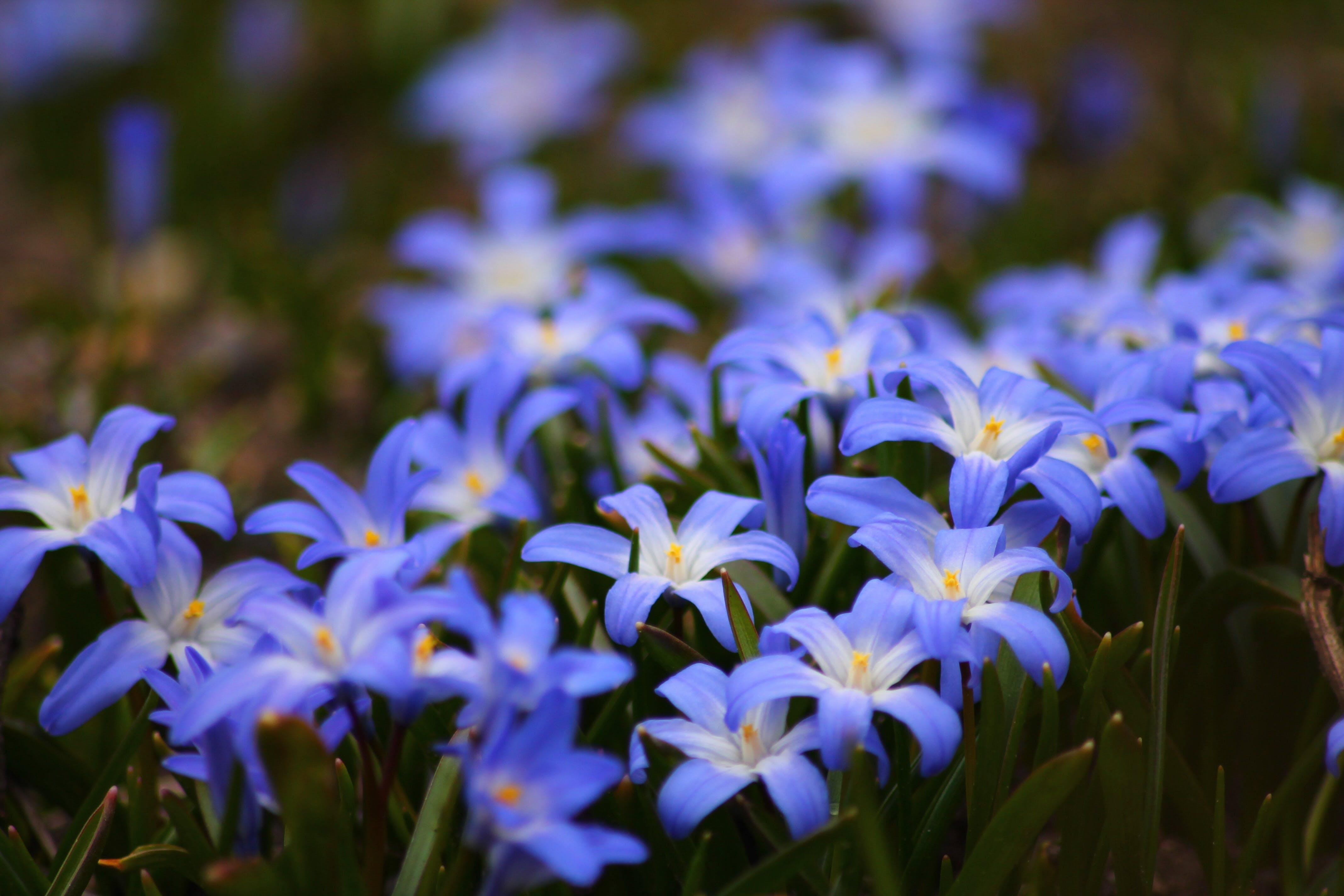 bloom, blossom, depth of field
