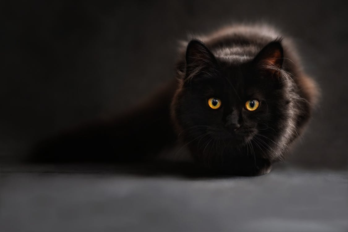 Brown and Black Cat