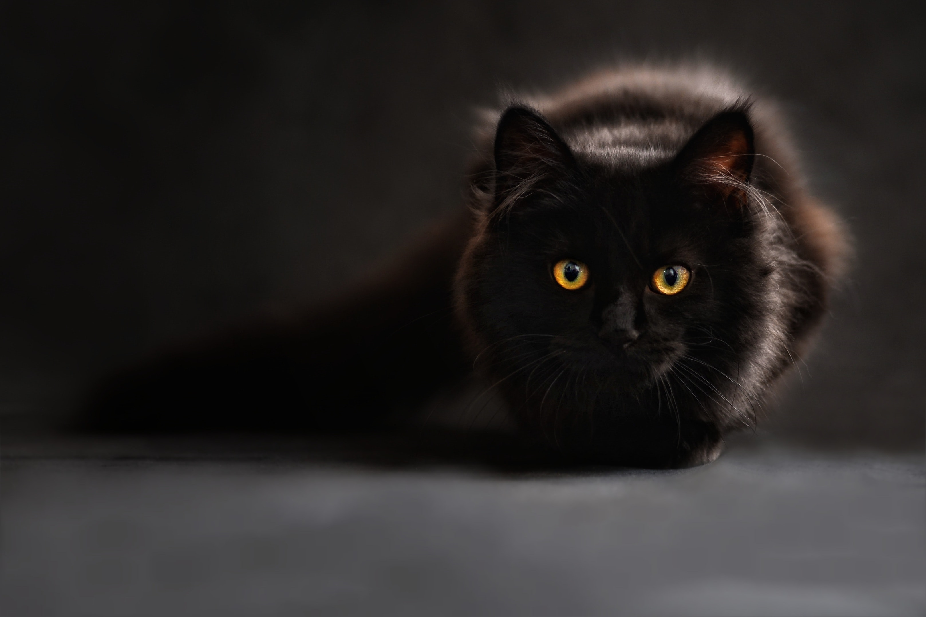 Brown And Black Cat Free Stock Photo