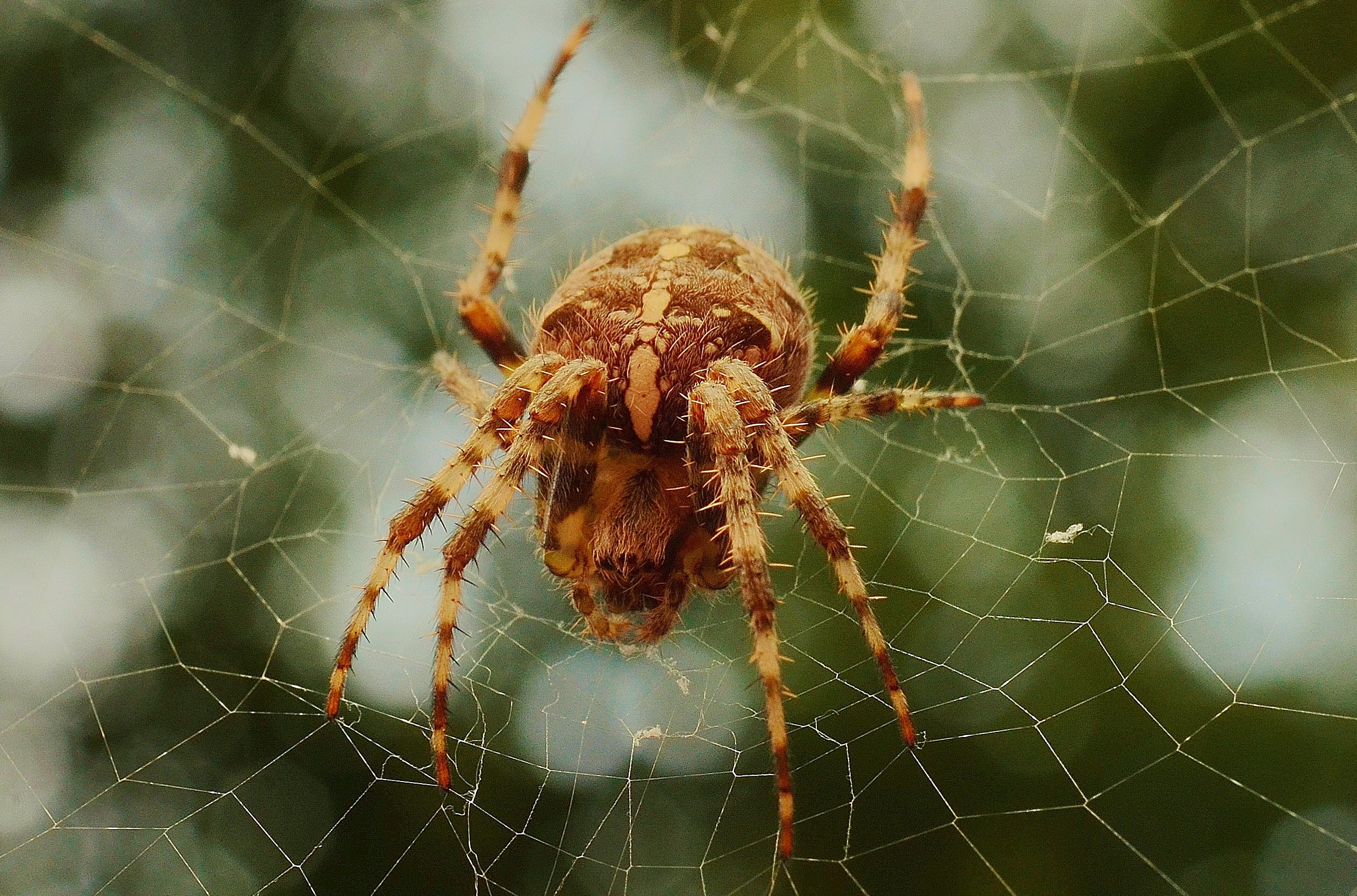 Free stock photo of insect, cobweb, spider, spider's web