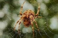 insect, cobweb, spider